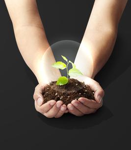 手のひらの中の植物-新芽-若葉-成長-未来の写真素材 [FYI04660219]