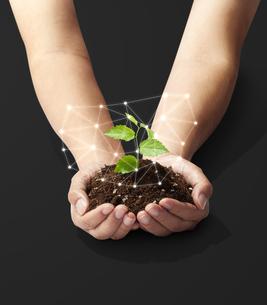 手のひらの中の植物-新芽-若葉-成長-未来の写真素材 [FYI04660220]