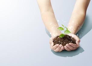 手のひらの中の植物-新芽-若葉-成長-未来-パワーの写真素材 [FYI04660221]