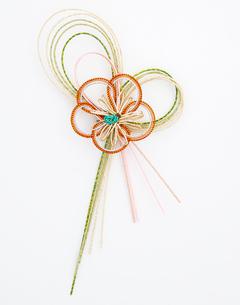 水引 梅(paper strings tied around a wrapped gift)の写真素材 [FYI04660428]
