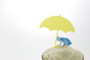 黄色い傘 カエルの写真素材 [FYI04660498]