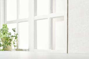 明るい部屋 観葉植物 窓の写真素材 [FYI04660508]