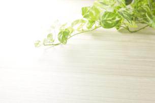 木目とグリーンの写真素材 [FYI04660659]