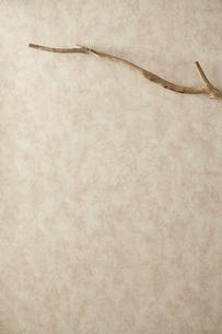 背景素材 枝と壁紙の写真素材 [FYI04660676]
