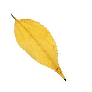 落葉した一枚の葉っぱの写真素材 [FYI04660691]