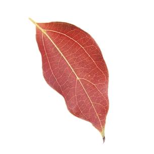 落葉した一枚の葉っぱの写真素材 [FYI04660694]
