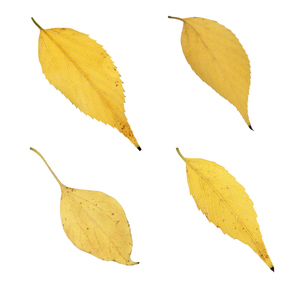 黄葉したいろいろな葉っぱの写真素材 [FYI04660701]