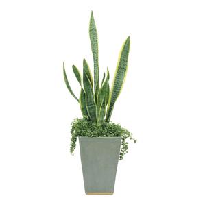 サンスベリア Snake Plant(白背景、切り抜き)の写真素材 [FYI04660725]