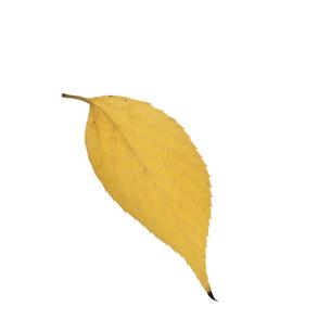 落葉した一枚の葉っぱの写真素材 [FYI04660843]