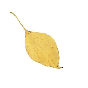 落葉した一枚の葉っぱの写真素材 [FYI04660846]