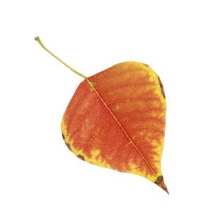 落葉した一枚の葉っぱの写真素材 [FYI04660850]