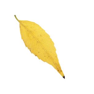 落葉した一枚の葉っぱの写真素材 [FYI04660851]