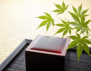 漆塗り枡-日本酒-青紅葉-初夏イメージの写真素材 [FYI04662528]