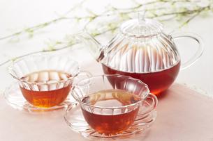 ティータイム(紅茶)の写真素材 [FYI04662548]
