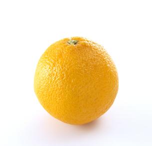 オレンジ1個の写真素材 [FYI04662900]