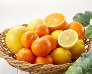 柑橘類イメージカットの写真素材 [FYI04662907]