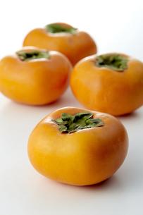 利根柿 (Japanese persimmon)の写真素材 [FYI04662953]