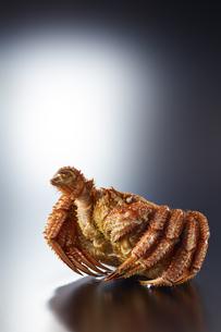 毛ガニ Vサイン (V sign of hair crab)の写真素材 [FYI04664039]