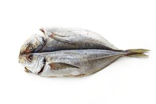 あじ開き (dried house mackerel)の写真素材 [FYI04664046]