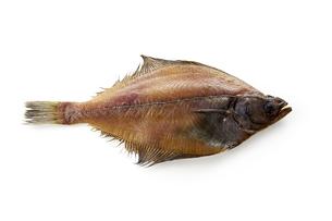 かれい一夜干し (dried flatfish)の写真素材 [FYI04664056]