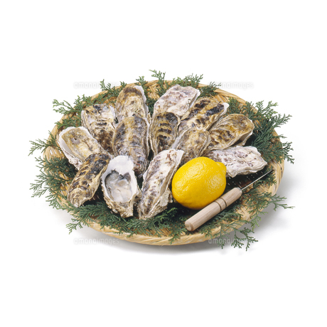 生牡蠣 (raw oyster)の写真素材 [FYI04664080]