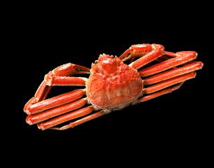 ずわい蟹 黒バックの写真素材 [FYI04664136]