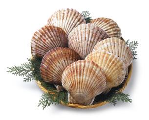 帆立貝の写真素材 [FYI04664206]