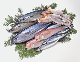 鮮魚集合の写真素材 [FYI04664328]
