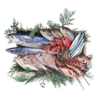 鮮魚集合の写真素材 [FYI04664337]