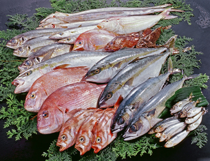 鮮魚大集合の写真素材 [FYI04664345]