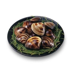 活ハマグリ clamの写真素材 [FYI04664475]