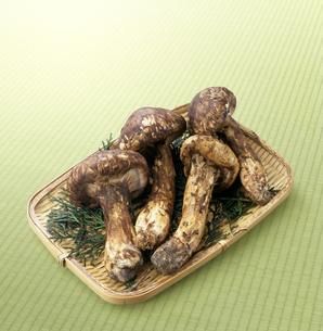 畳の上に置かれた松茸の写真素材 [FYI04664673]