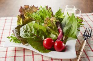 green saladの写真素材 [FYI04664857]