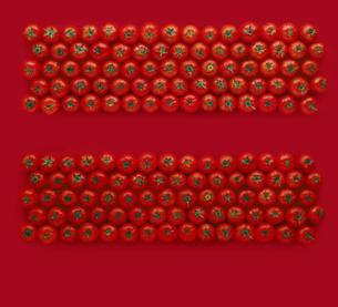 整列しているトマトの写真素材 [FYI04664938]