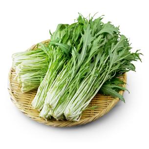 水菜の写真素材 [FYI04665059]