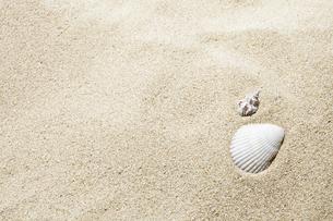 砂浜と貝殻の写真素材 [FYI04665078]