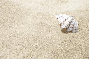 砂浜と貝殻の写真素材 [FYI04665097]