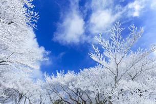 御在所岳 樹氷の写真素材 [FYI04665102]