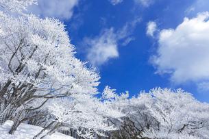 御在所岳 樹氷の写真素材 [FYI04665103]