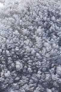 樹氷の写真素材 [FYI04665112]