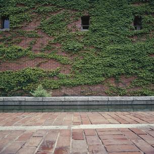 レンガ壁とツタの写真素材 [FYI04665120]