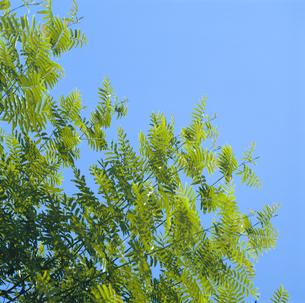 木と空の写真素材 [FYI04665129]