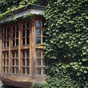 ツタがびっしり生い茂った洋館の格子窓の写真素材 [FYI04665141]