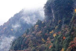 雨上がりの天川村みたらい渓谷紅葉の写真素材 [FYI04665193]