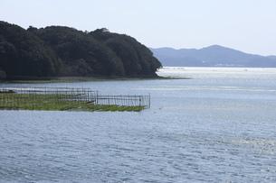 伊勢志摩-海苔粗朶-英虞湾-あおさのり-養殖の写真素材 [FYI04665458]