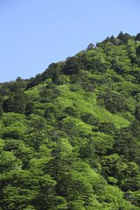 菰野町 新緑 雑木林の写真素材 [FYI04665477]