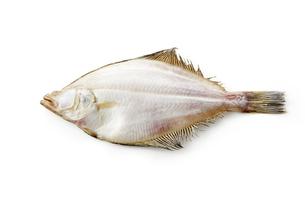 かれい一夜干し (dried flatfish)の写真素材 [FYI04666241]
