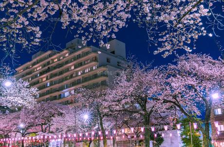 播磨坂のライトアップの桜と街明かり 東京夜景の写真素材 [FYI04666841]