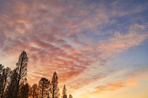 夕焼けと木立 春の写真素材 [FYI04667015]