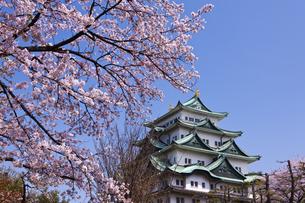 桜と名古屋城の写真素材 [FYI04667042]